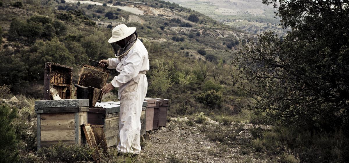 Ett liv med honung, SHF