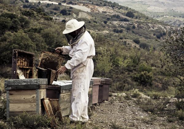 Ett liv med honung